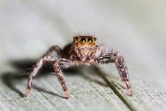 Selective focus macro of spider Stock Photo