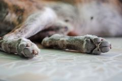Selective focus of old dog& x27;s paws royalty free stock photo