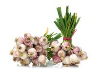 Selective Focus On New Crop Of Organic Garlic Allium Sativum Bulb Royalty Free Stock Images