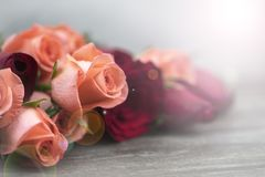 Selective focus of a orange rose  and light flare for background and presentation stock photos