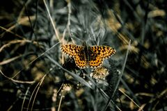 Selective Focus Photo of Black White and Yellow Butterfly Royalty Free Stock Image