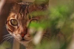 Selective Focus Photo of Brown Tabby Cat Royalty Free Stock Photos
