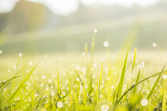 Selective Focus Photo of Green Grass With Droplet Royalty Free Stock Image