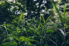 Selective Focus Photo of Green Grass Field Under Green Trees Royalty Free Stock Photo