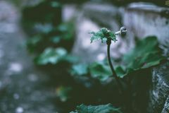Selective Focus Photo of Green Leaf Plant stock image