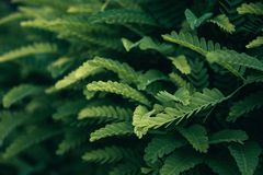 Selective Focus Photo Of Green Leafed Plant royalty free stock photos