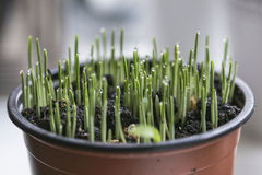 Selective Focus Photo of Green Plant Royalty Free Stock Photo