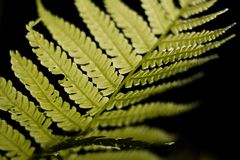 Selective Focus Photo of Linear Leaf Plant stock photography