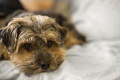 Selective Focus Photo of Long-coated Brown Puppy Stock Photo