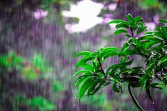 Selective Focus Photo of Obalte Green-leafed Plants during Rain stock photos
