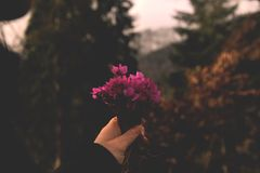 Selective Focus Photo Of Pink Petaled Flowers stock images