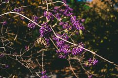 Selective Focus Photo of Purple Cluster Flowers Stock Photography