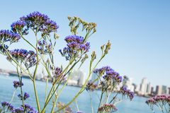 Selective Focus Photo of Purple Petaled Flowers Stock Photos