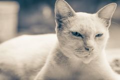 Selective Focus Photo of Short-fur Cat Royalty Free Stock Images