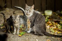 Selective Focus Photo of Silver Tabby Cat and Kittens Stock Photography