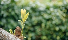 Selective Focus Photo of Tree With Green Leaves stock photography
