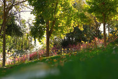 Selective focus photo of trees in the park.  Royalty Free Stock Photo