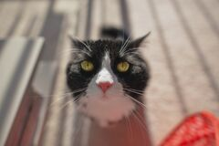 Selective Focus Photo of Tuxedo Cat during Daytime Royalty Free Stock Photos