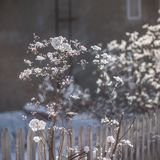 Selective Focus Photo of White Clustered Flowers Stock Images
