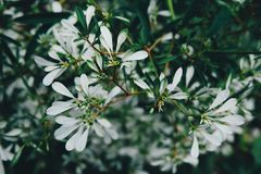 Selective Focus Photo of White Petaled Flowers Stock Image