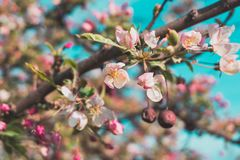Selective Focus Photo of White and Pink Petaled Flowers royalty free stock photos
