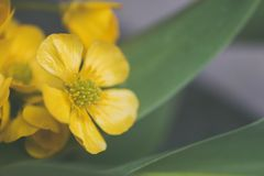 Selective Focus Photo of Yellow Flower Stock Photos