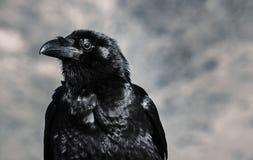 Selective Focus Photograph of Black Crow Stock Photo