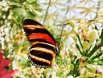 Selective Focus Photograph of Black and Yellow Butterfly royalty free stock photography