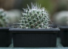 Selective Focus Photograph of Cactus Plant on Black Pot Stock Images