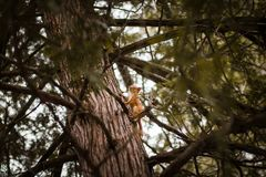 Selective Focus Photograph of Squirrel on Trunk Royalty Free Stock Photos