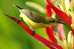 Selective Focus Photography of Black Green and Yellow Long Beaked Bird stock images
