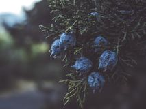 Selective Focus Photography of Blue Flowers royalty free stock image