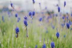 Selective Focus Photography of Blue Petaled Flowers Stock Image