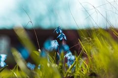 Selective Focus Photography of Blue Petaled Flowers Royalty Free Stock Photos