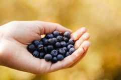 Selective Focus Photography of Blueberry on Human Hand royalty free stock photo