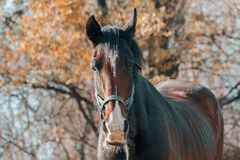 Selective Focus Photography of Brown Horse stock photography