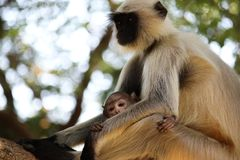 Selective Focus Photography of Brown Monkey stock images