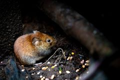 Selective Focus Photography of Brown Rodent Stock Images