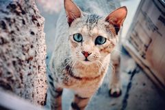 Selective Focus Photography of Brown Tabby Cat Stock Photography