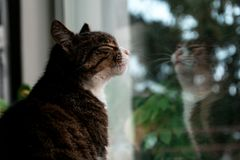 Selective Focus Photography of Brown Tabby Kitten Standing Against Glass Window Stock Photography
