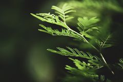 Selective Focus Photography of Fern Leaves stock photo