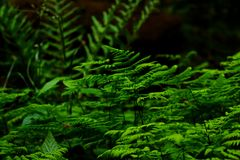 Selective Focus Photography of Fern Plant Royalty Free Stock Photo