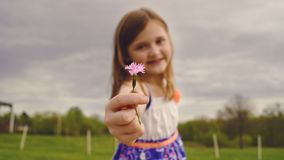 Selective Focus Photography of Girl Holding Pink Flower royalty free stock photos