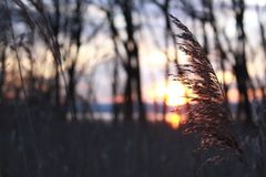 Selective Focus Photography Of Grass During Sunset stock image