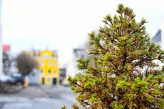 Selective Focus Photography of Green Fern Tree stock photo