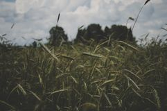 Selective Focus Photography of Green Grass Under White Sky Stock Image