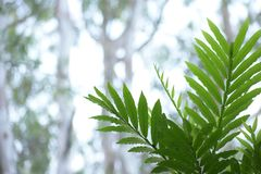 Selective Focus Photography of Green Leaf Stock Photos