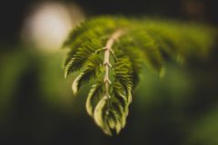 Selective Focus Photography of Green Leaf Plant Royalty Free Stock Photo