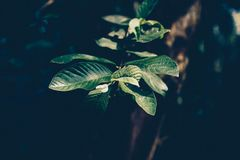 Selective Focus Photography Green Leaf Plant royalty free stock photography