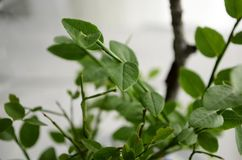 Selective Focus Photography of Green-leaf Plant royalty free stock image